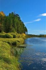 Árvores, grama, verde, lago, céu azul, paisagem natural