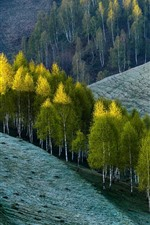 Trees, slope, nature scenery