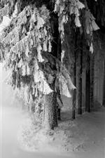 Aperçu iPhone fond d'écran Arbres, neige, chemin, brouillard, matin, hiver