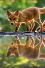 Aperçu iPhone fond d'écranDeux mignons petits renards, réflexion de l'eau