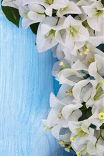 Preview iPhone wallpaper White bougainvillea flowers, blue background