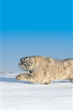 Preview iPhone wallpaper Wildcat, run, snow