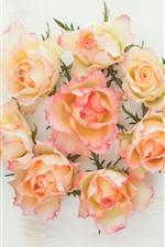 미리보기 iPhone 배경 화면 노란색과 분홍색 꽃잎 장미, 흰색 배경