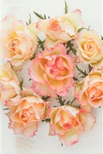 Rosas de pétalas amarelas e rosa, fundo branco