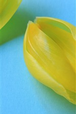 Preview iPhone wallpaper Yellow tulip petals, blue background