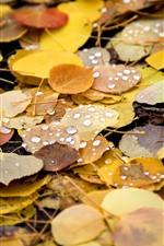 iPhone обои Осень, желтая листва, капли воды, земля