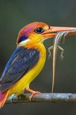 Preview iPhone wallpaper Black-backed Kingfisher catched a lizard