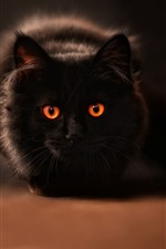Preview iPhone wallpaper Black cat, orange eyes, mouse