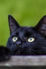 Black cat, yellow eyes, look, hazy background