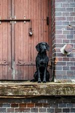 Preview iPhone wallpaper Black dog, door