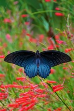 Preview iPhone wallpaper Blue wings butterfly, spider web, red flowers