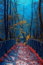 Bosnia, trees, bridge, autumn, park