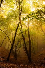 Preview iPhone wallpaper Forest, trees, sun, fog, autumn