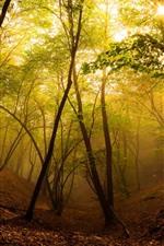 iPhone壁紙のプレビュー 森、木、太陽、霧、秋