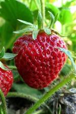 Fresh strawberries, stem, leaves