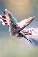 Preview iPhone wallpaper Hummingbird flight, wings, hazy