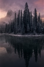 Lake, trees, frost, mountain, water reflection, fog