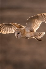Preview iPhone wallpaper Owl flight, wings, dusk