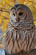 Preview iPhone wallpaper Owl in autumn, yellow leaves, twigs, tree