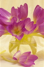 Pink crocuses, glass vase