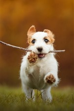 Preview iPhone wallpaper Puppy catch a stick and running