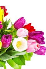 Purple, yellow, pink tulips, bouquet, white background