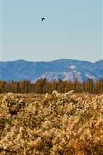 Preview iPhone wallpaper Reeds, trees, mountains, bird flight in sky