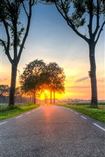 Road, trees, sunset, fields, countryside