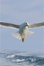 Preview iPhone wallpaper Seagull flight, wings, white bird, sea