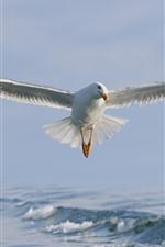 Voo de gaivota, asas, pássaro branco, mar