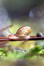 Preview iPhone wallpaper Snail, twigs, hazy, nature