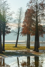 Some trees, river, fog, morning, autumn