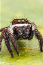 Preview iPhone wallpaper Spider macro photography, eyes, legs, green leaf