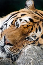 Preview iPhone wallpaper Tiger, rest, stone, big cat