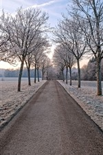 Trees, road, frost, winter