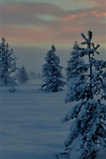Trees, snow, dusk, winter, clouds