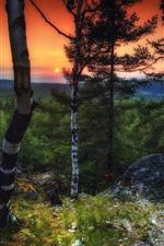 Árvores, pôr do sol, cenário da natureza