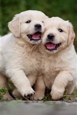 Preview iPhone wallpaper Two cute puppies, play games
