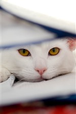 Preview iPhone wallpaper White cat, look, yellow eyes, rest