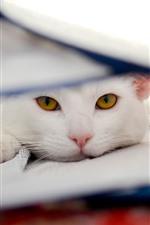 Weiße Katze, schau, gelbe Augen, ruhe