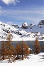 Neve branca, inverno, árvores, lago