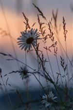 Preview iPhone wallpaper Wildflowers, grass, dusk