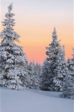 iPhone壁紙のプレビュー 冬、雪、モミの木、夕暮れ