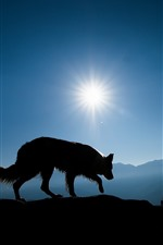 Wolf, mountains, sunshine, silhouette