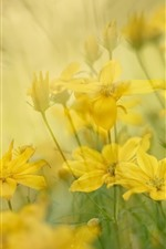 Preview iPhone wallpaper Yellow flowers, spring, hazy