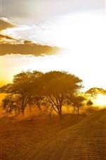Africa, road, trees, fog, morning