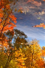 Preview iPhone wallpaper Autumn, pond, water reflection, trees, red maple leaves