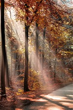 Autumn, sun rays, trees, road, red leaves