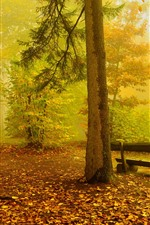 Preview iPhone wallpaper Autumn, trees, fog, bench, nature scenery