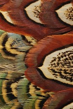 Preview iPhone wallpaper Bird feathers macro photography, texture